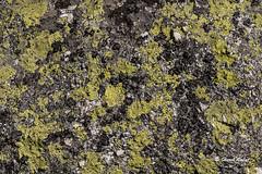 Microstructures_0144 (hervv30140) Tags: paysage nature pierre roche champignon lichen jaune