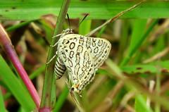 IMG_6167 (mohandep) Tags: hessarghatta lakes karnataka butterflies birding nature wildlife insects signs food
