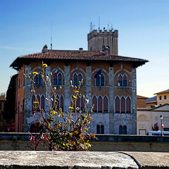 Lungarno Galileo Galilei, Pisa (pom'.) Tags: panasonicdmctz101 april 2018 lungarno lungarnogalileogalilei pisa flower toscana tuscany italia italy europeanunion 100 200