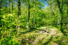 Darmstadt Forest Chair (fxgeek) Tags: fuji hdr aurorahdr2018 nature landscape forest trees tweetme