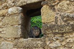 JLF18943 (jlfaurie) Tags: montignacsurvézère dordogne périgord jlfr chat gato cat pared mur trou france francia