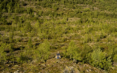 Among birches (Pascal Riemann) Tags: norwegen fjäll landschaft mengenkontrast pflanze person baum skandinavien birke zwergbirke natur nigardsbreen fjell landscape nature norge norway outdoor scandinavia dwarfbirch plant sognogfjordane no