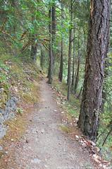 2018-08-18 Whistle Lake Trail 205 (12) (680x1024) (-jon) Tags: anacortes skagitcounty skagit fidalgoisland sanjuanislands washingtonstate washington pnw pacificnorthwest salishsea pugetsound acfl anacortescommunityforestlands whistlelake lake trail path 205 nikon nikonl22 tree douglasfir fern alder summer woods forest a266122photographyproduction hiking hike walk walking
