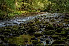 S potoka Curka (2) (MountMan Photo) Tags: potokcurak izletištezelenivir značajnikrajobraz protectedlandscape gorskikotar primorskogoranska croatia landscape voda water zelenilo greenery creek