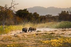 Parc Kruger... (mille_emmanuel) Tags: voyage canon nature afriquedusud kruger color