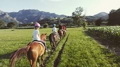 #cuadraelalisal #Asturias #caballos #rutasacaballoasturias #paseosacaballo #horses #horseslovers #turismo #ecoturismo