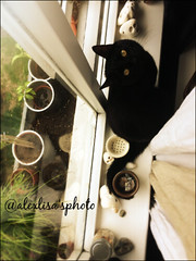 47 (alexlisa'sphoto) Tags: chat cat cute mignon adorable noir yeux eye ojos blanc black white gato