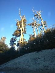 Bosques ,coihues,parque nacional Nahuel Huapi,patagonia Argentina !! (Gabriel mdp) Tags: bosques coihues parque nacional nahuel huapi patagonia argentina