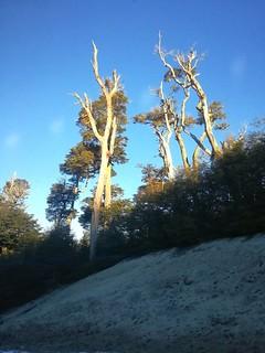 Bosques ,coihues,parque nacional Nahuel Huapi,patagonia Argentina !!