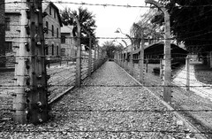 niet te vatten (roberke) Tags: monochrome zwartwit blackwhite blackandwhite auswitch prikkeldraad street straat war oorlog polen boom