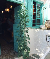 tobacco growing from the doorstep (Paradiso's) Tags: door shop apollonia greece opening sifnos tobacco growing from nicotiana tabacum tabaksplant tembakau green