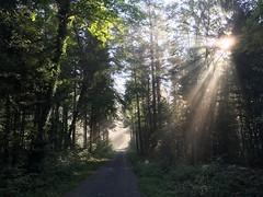 IMG_2972 (eduard43) Tags: natur nature rafz sonne sun waldwege wald forest forestpaths schweiz 2018 iphone