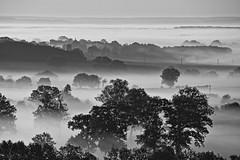 Brumeuse Normandie... (Tonton Gilles) Tags: vingthanaps normandie hdr noir et blanc arbres campagne plans brume broe brouillard matin heure dorée prés paysage ecouves bocage