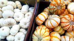 Varieties (EmperorNorton47) Tags: ranchosantamargarita traderjoes california photo digital summer harvest pumpkins squash market
