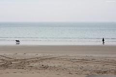 Pirou : la promenade du chien (philippeguillot21) Tags: beach chien promeneur pirou manche cotentin normandie france europe pixelistes canon