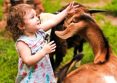 Kids (SweetCreek) Tags: baby goat nubian kid summer girl playing fun farm farming agriculture nature outdoors cute sweet gentle petting reaching nifty50