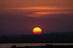 S u n d o w n (_Amritash_) Tags: sundown sunset birdsanctuary bird silhouette landscape lake water travel maharashtra india indiantravel