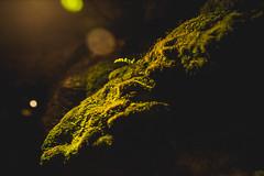 Ireland2017Day3-0785-HDR (Sweetleavins) Tags: ireland green fern underground cave