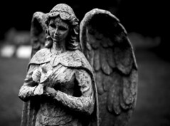 (JasonCameron) Tags: black white monochrome grave graveyard cemetery death marker headstone old angel statue dove eyes blackness