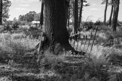 Morning/Evening (Barnaby Nutt) Tags: leica camera m monochrom ccd m9m abandoned german graveyard cemetery cmentarz