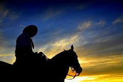 Setembro (Eduardo Amorim) Tags: gaúcho gaúchos gaucho gauchos cavalos caballos horses chevaux cavalli pferde caballo horse cheval cavallo pferd crioulo criollo crioulos criollos cavalocrioulo cavaloscrioulos caballocriollo caballoscriollos pampa campanha santavitóriadopalmar riograndedosul brésil brasil sudamérica südamerika suramérica américadosul southamerica amériquedusud americameridionale américadelsur americadelsud cavalo 馬 حصان 马 лошадь ঘোড়া 말 סוס ม้า häst hest hevonen άλογο brazil eduardoamorim