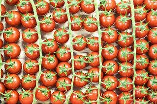 Tomato Patterns 🍅