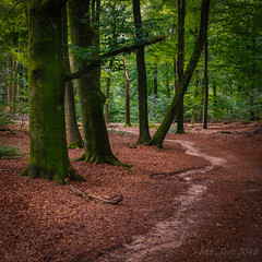 Following the trail @ the woods (Marcel Tuit | www.marceltuit.nl) Tags: oosterbeek natuur thenetherlands me nature gelderland nederland outdoor canon bos holland wwwmarceltuitnl marceltuit forest hiking contactmarceltuitnl wandelen veluwe eos