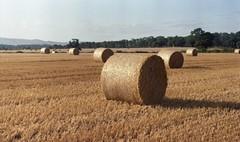 (Mrs.Black&White) Tags: zenitb helios44258mmf2 handprocessed c41process tetenalc41 kodak kodacolor200 35mmfilm hay farming