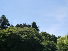 Good-bye, forest (しまむー) Tags: panasonic lumix dmcgx1 gx1 g 20mm f17 asph 東北大学 オープンキャンパス tohoku university tour