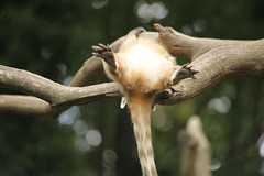 IMG_4458 (gabrielgs) Tags: holiday holiday2018 vakantie2018 camping frankrijk france zoo la fleche lafleche animals dierentuin loire