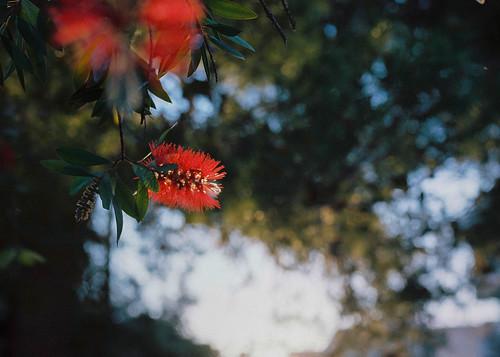 Athens - Spring