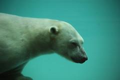 IMG_4354 (gabrielgs) Tags: holiday holiday2018 vakantie2018 camping frankrijk france zoo la fleche lafleche animals dierentuin loire