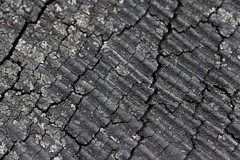 Dried wood pattern (Victor Engmark) Tags: wood zurich switzerland outdoor pattern moss