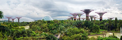 Gardens By The Bay (claustral) Tags: 2018 singapore panorama gardensbythebay stormapproaching gardens plants tropical