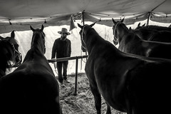 Amish Man (crabsandbeer (Kevin Moore)) Tags: winter amish animals auction children farm hats horses livestock mennonite mudsale people rural spring tent gordonville bw blackandwhite monochrome stall barn candid portrait man pennsylvania