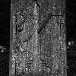 21 - Cimetière de Fécamp, Tombe thumbnail