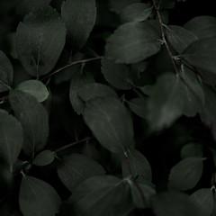 Dark Botanical Aesthetics III (palestation) Tags: dark plants green botanical aesthetics pale