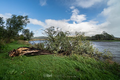 Storm Ali - 19 Sep 2018 - 03 (ibriphotos) Tags: storm stirling riverforth tree rainbow weather wallacemonument forthvalleycollege