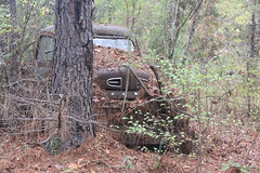 More Relics & Refugees (BennyPix) Tags: junkyard rust old classic vintage antique retro barkada wilmar ar drewcounty arkansas november 2015 © allrightsreserved unauthorizedusestrictlyprohibited allcommercialuseprohibited junk car auto automobile bennypix canon eos 50d ford pickup truck f1