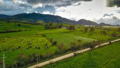 Atardecer en el Corregimiento de Ovejas, San Pedro de los Milagros, Antioquia, Colombia (Andrés García Avila) Tags: suns sunset atardecer san pedro antioquia