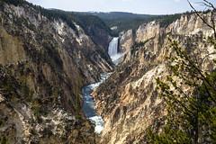 Grand Canyon of the Yellowstone (Bill in DC) Tags: wy wyoming yellowstonenationalpark 2018 grandcanyonoftheyellowstone