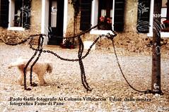 paologalloscDSC_2612 (BXIJNGOHAZD6GRPENLFTO7OOQ5) Tags: paolo gallo fotografo cane cani villacaccia foto catena animale animali fame di pane mostra fotografica udine italia