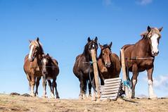 Bisaurín (Aragon) (PierreG_09) Tags: aragon espagne spain españa bisaurin visaurin montagne randonnée lizara faune cheval estive transhumance foraton col colladodelforaton