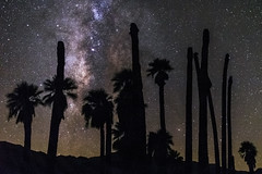 Desert Palm Trees and the Milky Way at Corn Springs, California (slworking2) Tags: blythe california unitedstates us cornsprings palms desert desertcenter milkyway night sly palmtree oasis astronomy