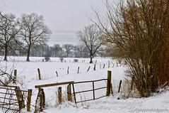 Winterlandschaft in Bönningstedt (Gelegenheitsknipser) Tags: marcopagel mpfotonet gelegenheitsknipserde 2013 deutschland norddeutschland schleswigholstein sh kreispinneberg pi winter schnee wald landschaft natur