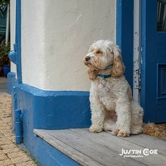 Dog guarding his step #pets #puppies #dogoftheday #doglover #ilovemydog #puppylove #petstagram #dogsofig #dogs_of_instagram #petsofinstagram #puppiesofinstagram #doglovers #animals #doggy #doglife #pup #instadogs #instagramdogs #dogslife #instapuppy #dogs (justin.photo.coe) Tags: ifttt instagram dog guarding his step pets puppies dogoftheday doglover ilovemydog puppylove petstagram dogsofig dogsofinstagram petsofinstagram puppiesofinstagram doglovers animals doggy doglife pup instadogs instagramdogs dogslife instapuppy dogsofinstaworld lovedogs animal weeklyfluff adorable doglove dogsofinsta adoptdontshop instapet bestwoof