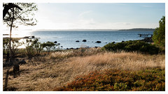 View From East To West / Saltnes Norway (Eline Lyng) Tags: leicalens manualfocus summilux35mmasph leicasl leica saltnes østfold norway pier summer afternoon grass coastline coast water sea seascape nature landscape