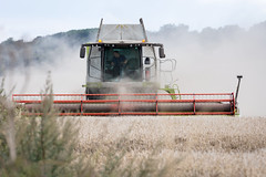 harvest 3 (Jez22) Tags: harvest harvesting kent england combine claas lexion actonfarm grain crop cereal dust dusty farm farming agriculture agricultural machine summer dry weather arable field straw ripe wheat photo copyright jeremysage