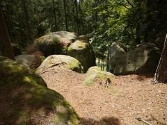 Głazy Krasnoludków (nesihonsu) Tags: zawory głazykrasnoludków gorzeszów cretaceous sandstone sandstones piaskowiec piaskowce rocks rockformation sudety sudetes sudeten poland polska przyrodapolska natureofpoland nature naturereserve geology geologia geologiapolski góry geotourism geoturystyka geologyofpoland lowersilesia dolnyśląsk dolnośląskie