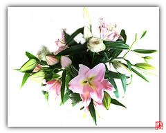 Ça c'est le bouquet ! (mamnic47 - Over 9 millions views.Thks!) Tags: 6c8a1191 highkey bouquet lys lilium